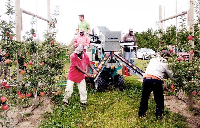 Machine cuts labour cuts