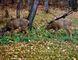 Deer grazing Oct. 16.  PHOTO by HOLLY BOCHURKA