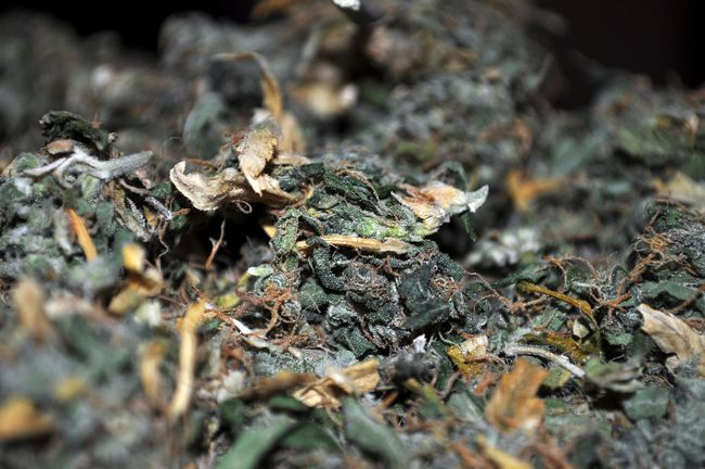 File shot of marijuana.