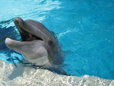 One of the friendly bottlenose dolphins at SeaWorld San Antonio's Dolphin Cove. JANE STEVENSON/TORONTO SUN