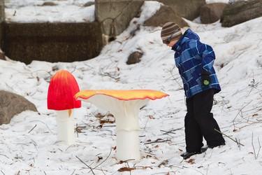 Tyson, 6, checks out a giant mushroom installation during Silver Skate Festival at Hawrelak Park in Edmonton, Alta. on Saturday, Feb. 16, 2013. Amber Bracken/Edmonton Sun/QMI Agency