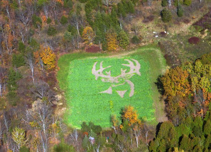 Food Plots For Deer Deer-head Food Plot