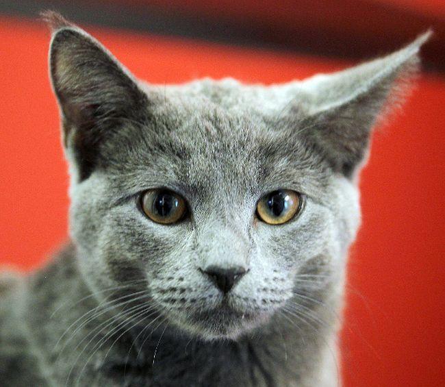 cat filer
