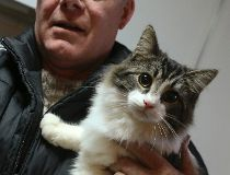 Phel Trevor Storm cats