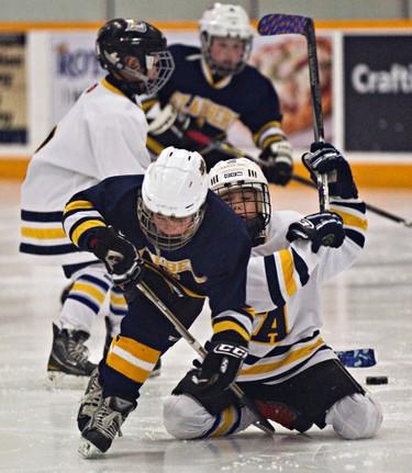 St. Albert Junior Raiders' (in blue) Jake Giacobbo is hassled by St. Albert Attack's (in white) Nikolai Belyea during Quikcard Minor Hockey Week novice action at Servus Place in St. Albert, Alta., on Saturday, Jan. 11, 2014. Codie McLachlan/Edmonton Sun/QMI Agency