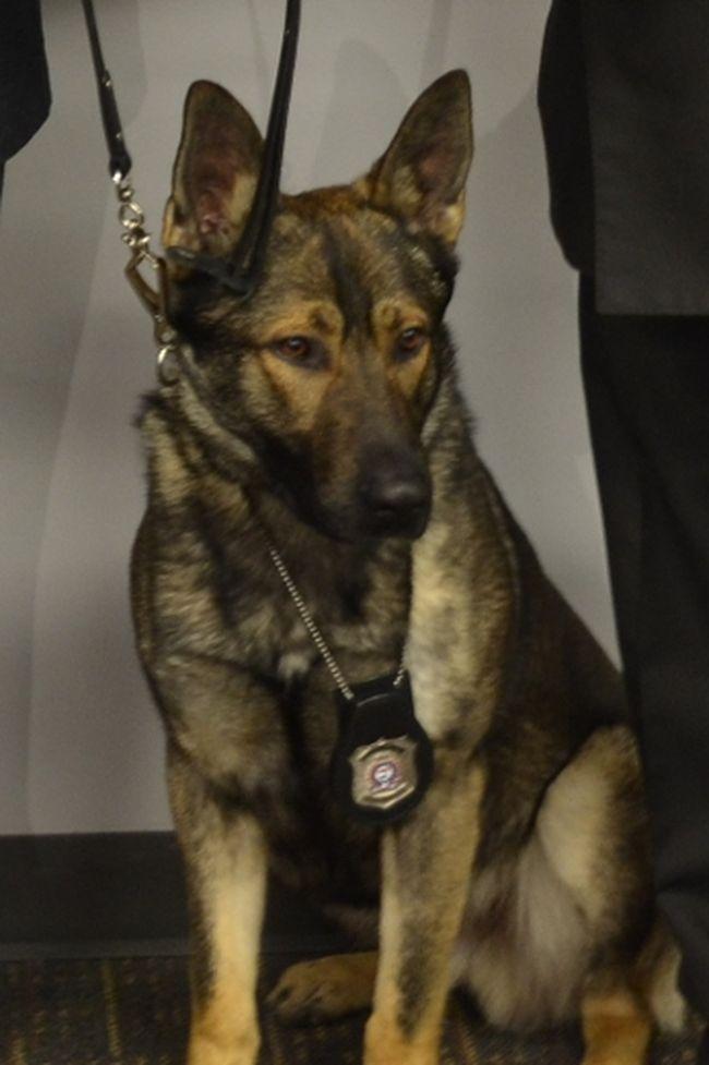 London police dog Wilco