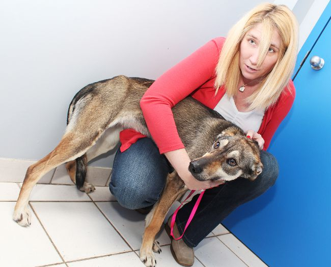 Brant Humane Society Dogs