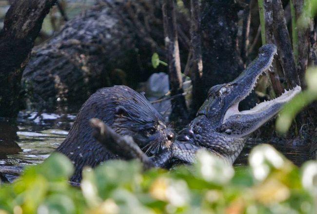 (Geoff Walsh/Lake Woodruff National Wildlife Refuge)