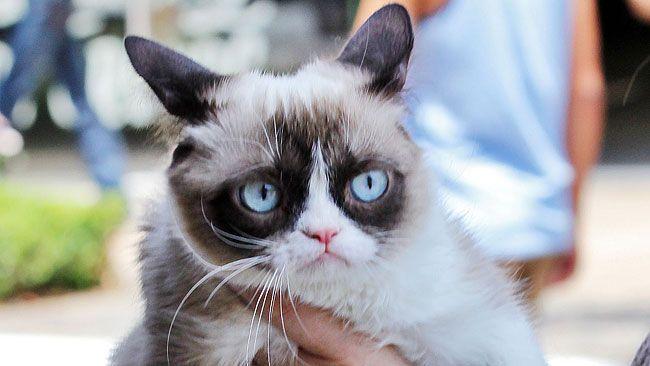 "Grumpy Cat, aka Tardar Sauce. (Try CW/<a href=""http://www.wenn.com"" target=""new window"">WENN.com</a> File Photo)"
