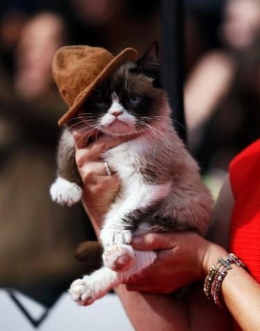 Grumpy cat arrives at the 2014 MTV Movie Awards in Los Angeles, California  April 13, 2014. (REUTERS/Danny Moloshok)