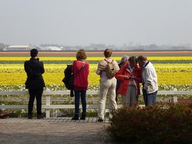 Visitors look at one of many flower bulb fields near Keukenhof garden in Lisse, Netherlands. ROBIN ROBINSON/TORONTO SUN