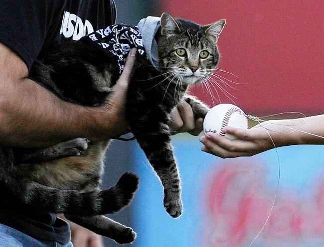 Hero cat Tara. (REUTERS/Kevork Djansezian)