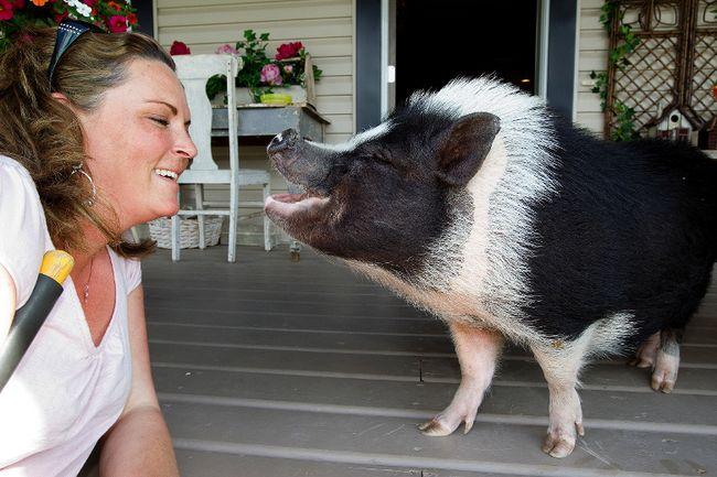 Eli Pig
