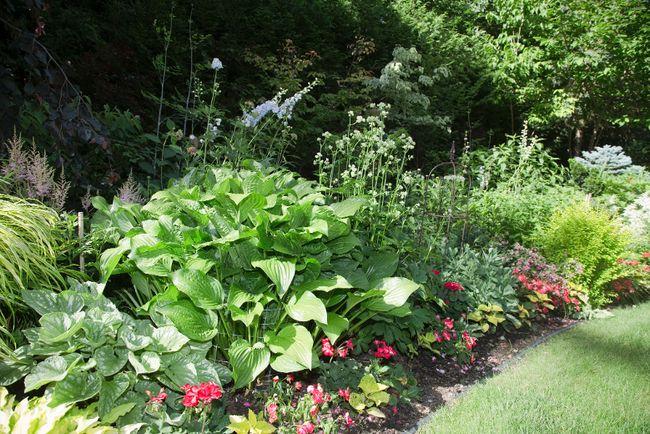 Bhama Rajgopal's  backyard garden  in London, Ontario on Tuesday, July 1, 2014. DEREK RUTTAN/ The London Free Press /QMI AGENCY