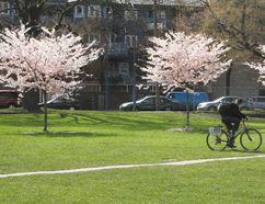 Oppenheimer Park in Vancouver. (QMI Agency file photo)