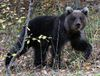 Price check on honey? Bear cub wanders into Oregon drugstore