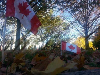 Mini Canadian flags wave in a field near the War Memorial in Ottawa on October 24, 2014. (Danielle Bell/QMI Agency)