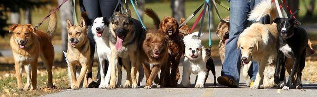 Calgary Dogs