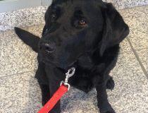 Victim's assistant unit dog Hawk
