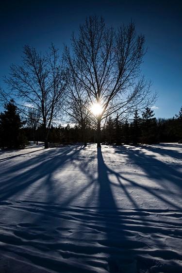 A tree casts long shadows in Gold Bar Park in Edmonton, Alta., on Monday, Nov. 10, 2014. Codie McLachlan/Edmonton Sun/QMI Agency
