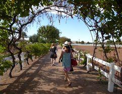 Visitors stroll along pathways at the Farm at Agritopia in Gilbert, Arizona. ROBIN ROBINSON/TORONTO SUN