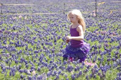 Korah, 6, from Fort Hood, Texas, runs through blue bonnets at the Wildseed Farms near Fredericksburg, Texas. (Photo: Kate Schwass-Bueckert/QMI Agency)