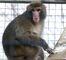 Darwin, the Ikea Monkey_4
