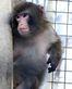 Darwin, the Ikea Monkey_7