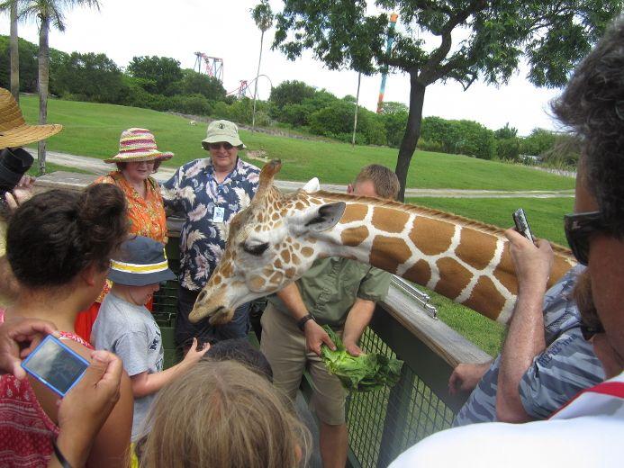 Florida Running wild in Tampa Bay Sarnia Observer