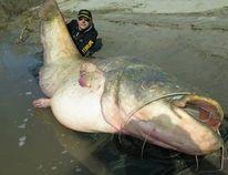 Italian fisherman Dino Ferrari holds up the 280-pound catfish he caught. (Photo via Sportex Italia's Facebook page)