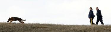 A RCMP dog team investigates in a field near a burned car and a tent setup at a rural crime scene off Highway 16 and Range Road 14 near Stony Plain, Alta., on Friday, April 3, 2015. Ian Kucerak/Edmonton Sun/ QMI Agency