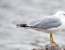 Postmedia Network file photo of a seagull