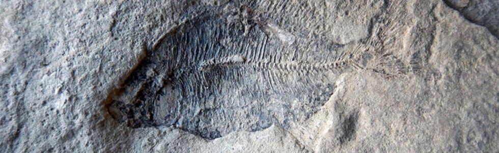 fossilized fish Edgar Nernberg