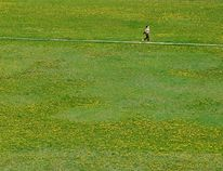 A runner jogs past flourishing patches of dandelions as she descends into Bear Creek near 68 Avenue earlier this spring. Tom Bateman/Grande Prairie Daily Herald-Tribune/Postmedia Network