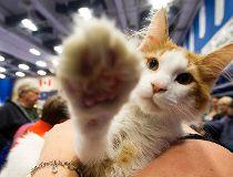 Photos; Edmonton International Cat Festival