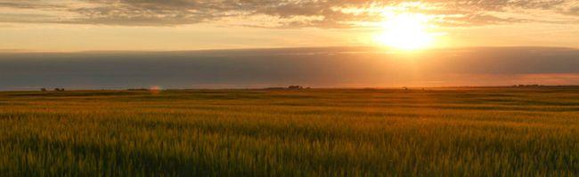 Barley near Acme