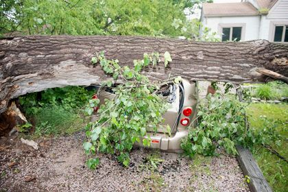 tree smashes car