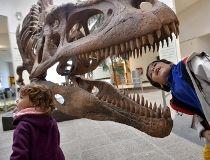 Tyrannosaurus Rex replica