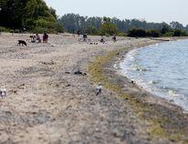 Wellington Beach, seen here in July 2015. Intelligencer/Postmedia Network.