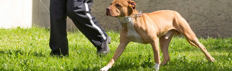 Ranchlands dog attack
