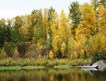 Fall foliage at Muir Lake. (Neil Waugh/Edmonton Sun)