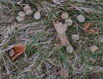 Poisoned dog kibble found on the ground around a mailbox on Shawbridge Blvd. in Vaughan. (YRP via Twitter)
