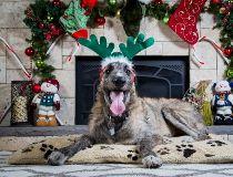Milk River dog seizure Christmas