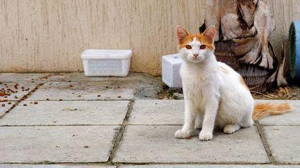 Stray cat fotolia