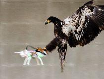 Dutch Police eagle drone