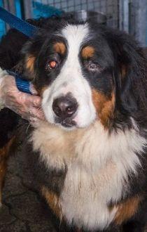 SPCA seizure
