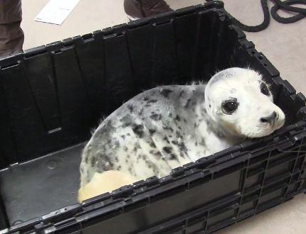 sammy the seal