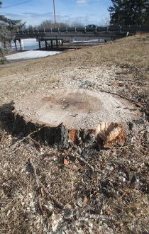 Inglewood tree anger