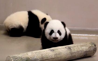 Pandas 4 months