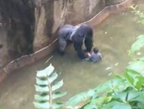 Gorilla boy